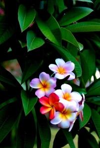 flores-5056